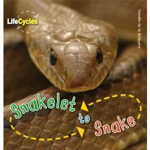 to Snake (Qed Life Cycles) (9781848355811): Camilla De Bedoyere: Books