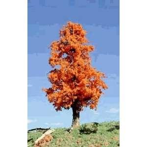 Timberline Scenery Deciduous 6 9 October Orange Tree