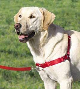 EASY WALK HARNESS Dog Premier/Gentle Leader No Pull