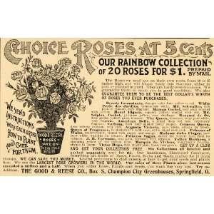 1897 Ad Rainbow Roses Flower Varieties Good Reese Price   Original