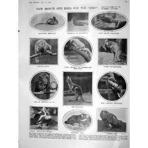 1908 ZOO BIRDS SQUIRREL OWL KA PELICAN FIAT CAR JOHNSON