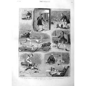 1884 FINE ART GARDENER PIGS PUPPY DOGS OLD MAN PRINT: Home & Kitchen