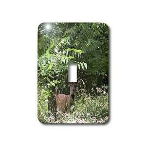 Beverly Turner Photography   Young Buck   Light Switch Covers   single